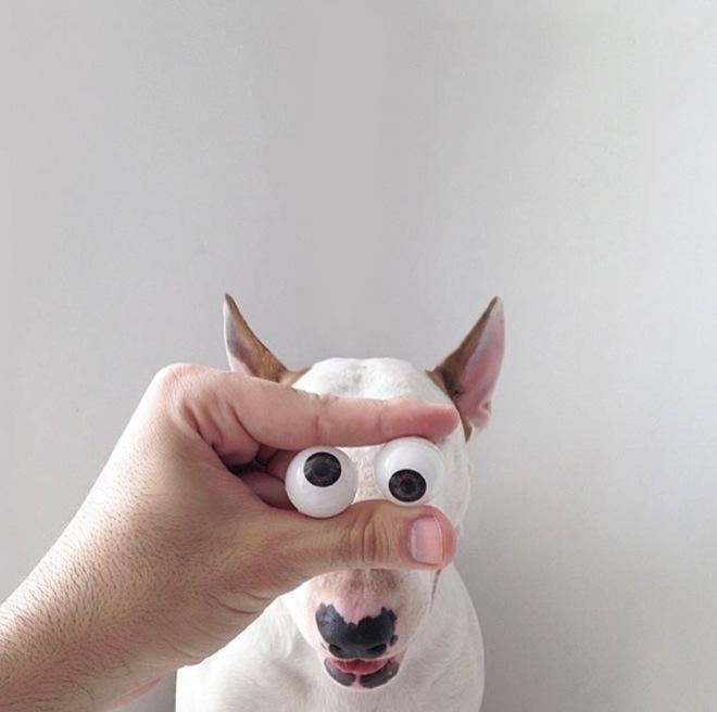 dog-illustrations-15