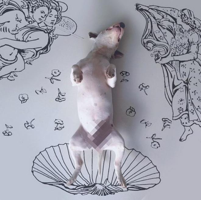 dog-illustrations-2