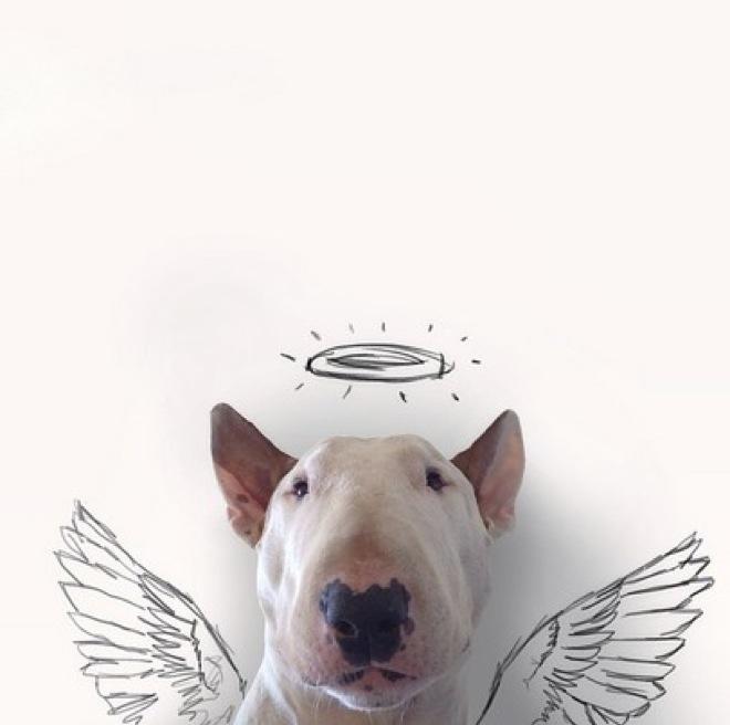 dog-illustrations-3