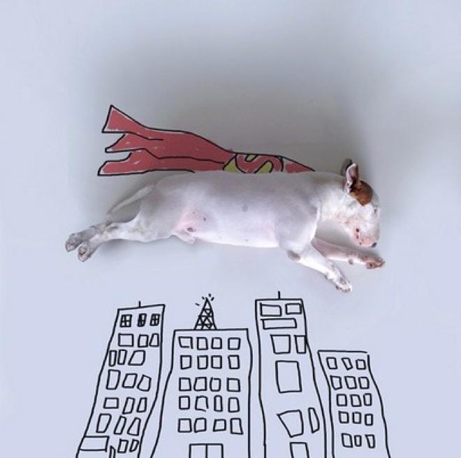 dog-illustrations-5