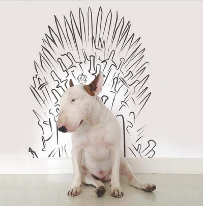 dog-illustrations-7