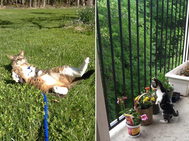 indoor-cats-8