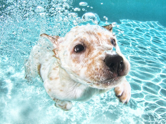 underwater-pets-1