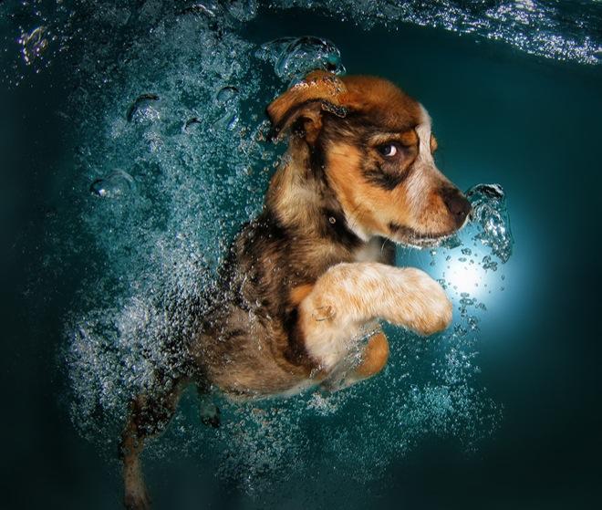 underwater-pets-2