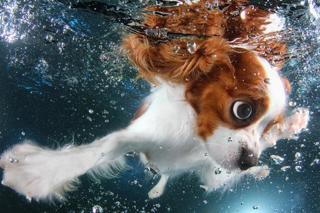 underwater-pets-4