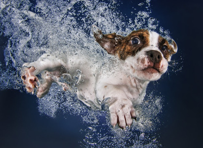 underwater-pets-5
