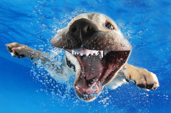 underwater-pets-7