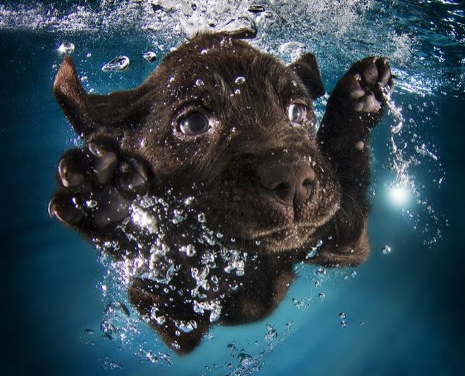 underwater-pets-9