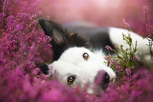 alicja-myslowska-dog-portraits-1