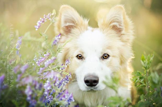 alicja-myslowska-dog-portraits-10