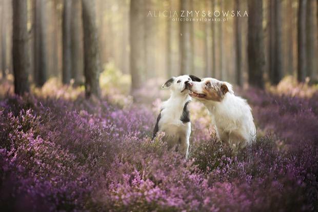 alicja-myslowska-dog-portraits-12
