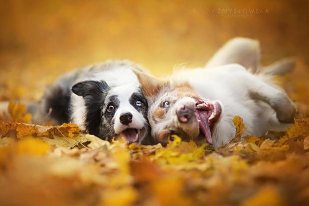 alicja-myslowska-dog-portraits-13