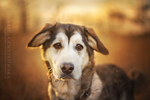 alicja-myslowska-dog-portraits-14