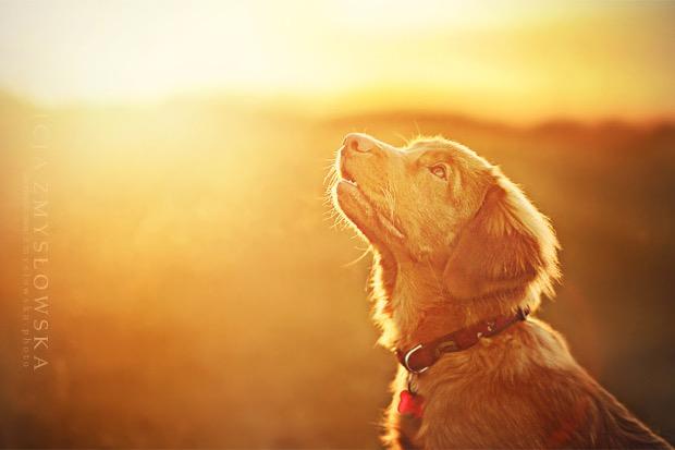 alicja-myslowska-dog-portraits-15