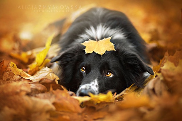 alicja-myslowska-dog-portraits-2