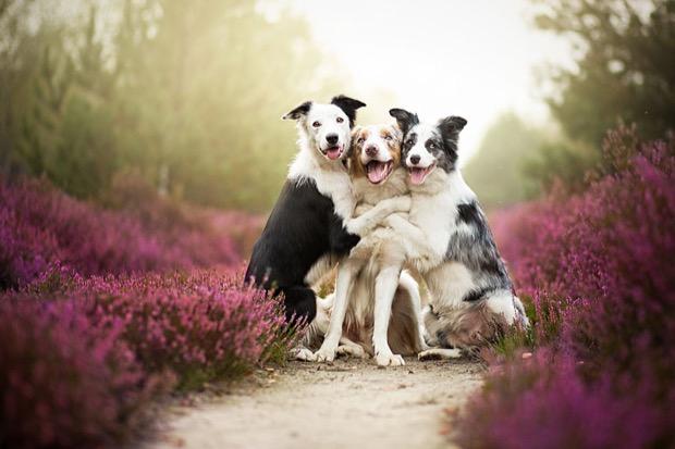 alicja-myslowska-dog-portraits-3