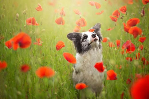 alicja-myslowska-dog-portraits-4