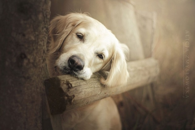 alicja-myslowska-dog-portraits-5