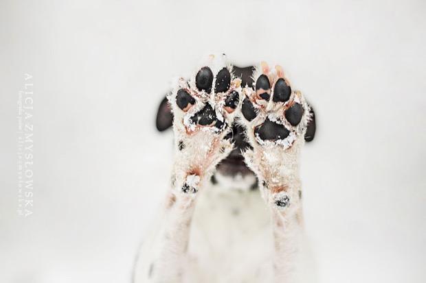 alicja-myslowska-dog-portraits-6