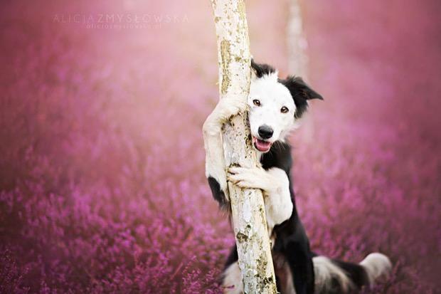 alicja-myslowska-dog-portraits-7