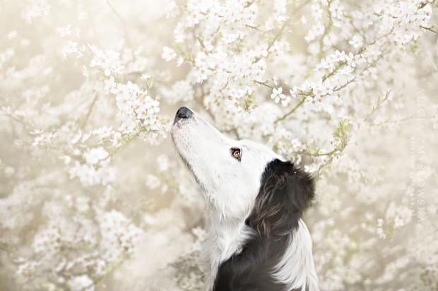 alicja-myslowska-dog-portraits-8
