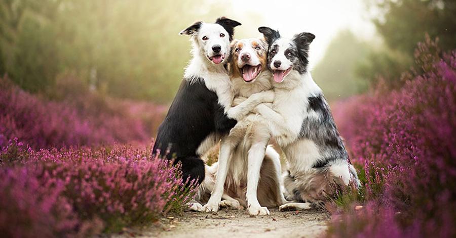 alicja-myslowska-dog-portraits