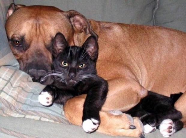 via: kittenspet.com