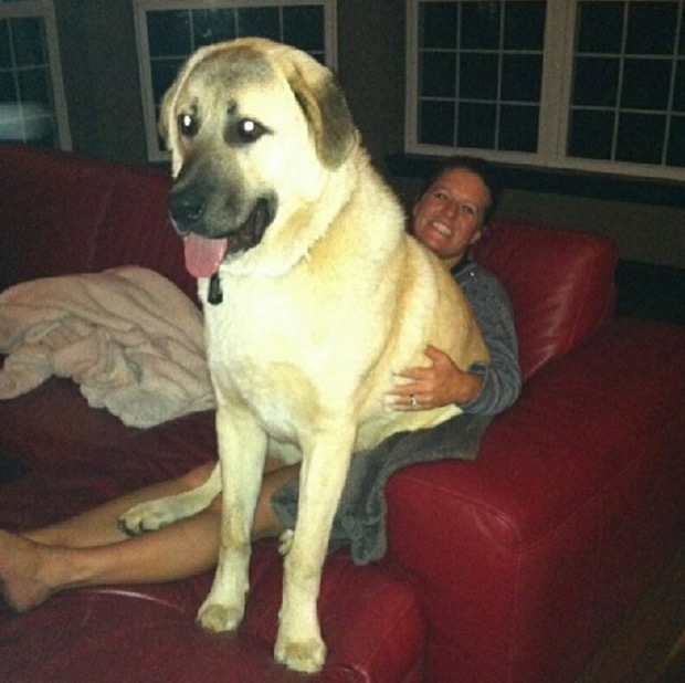 dogs-personal-space-18