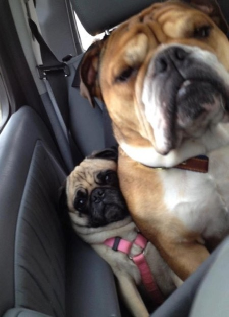 dogs-personal-space-2
