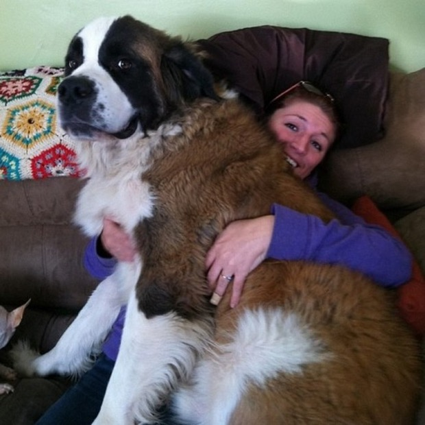 dogs-personal-space-8