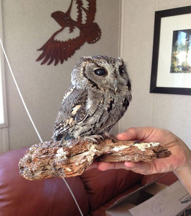 zeus-blind-owl-5