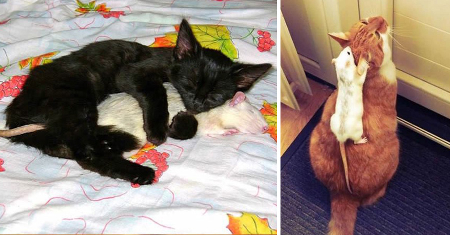 cats-being-friends-with-mice