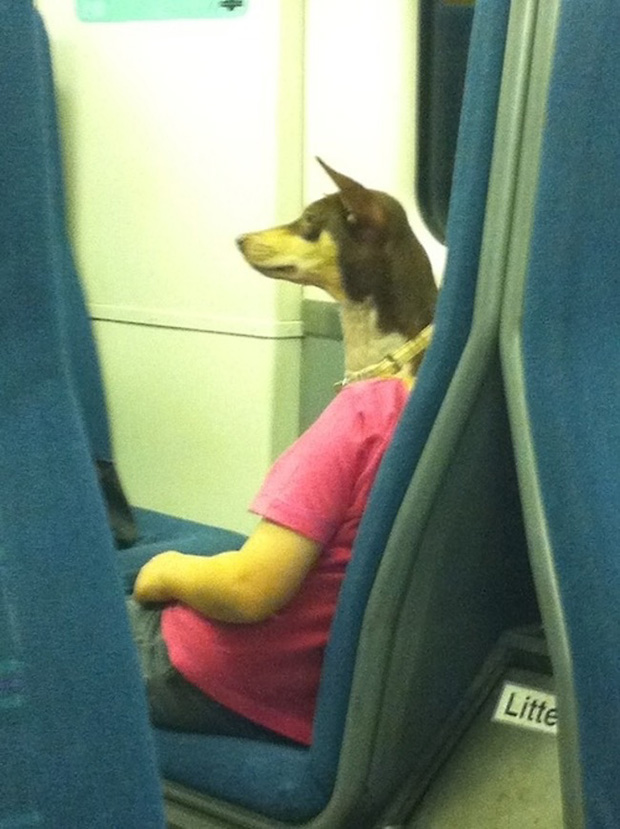 Perfectly Timed Dog Pictures That Are Impossible Not To Laugh - 21 hilarious dog moments