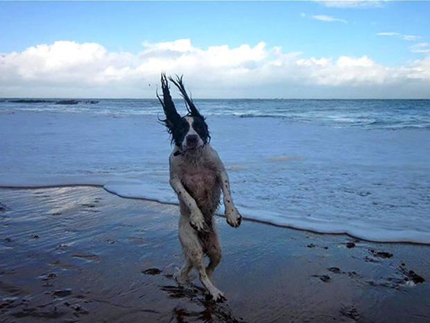 Perfectly Timed Dog Pictures That Are Impossible Not To Laugh At - 21 hilarious dog moments