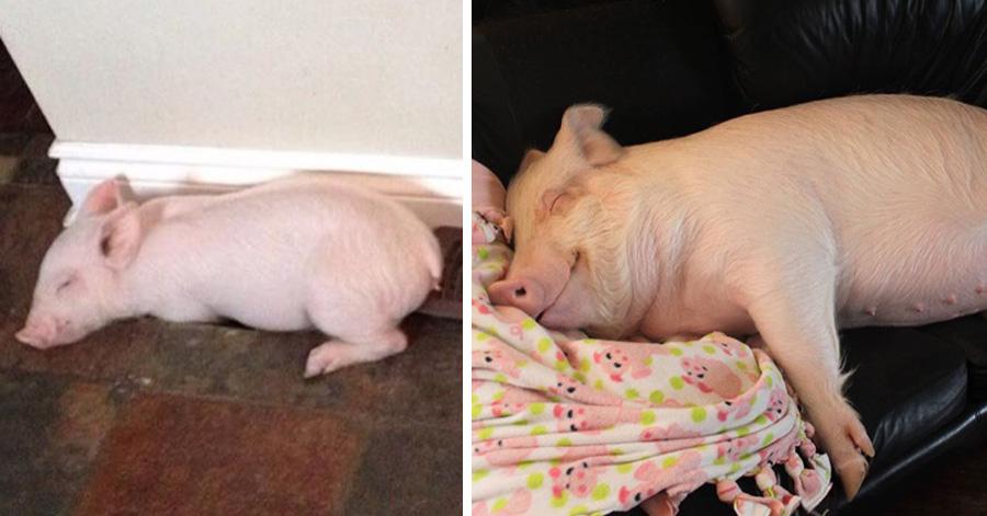 esther-wonder-pig
