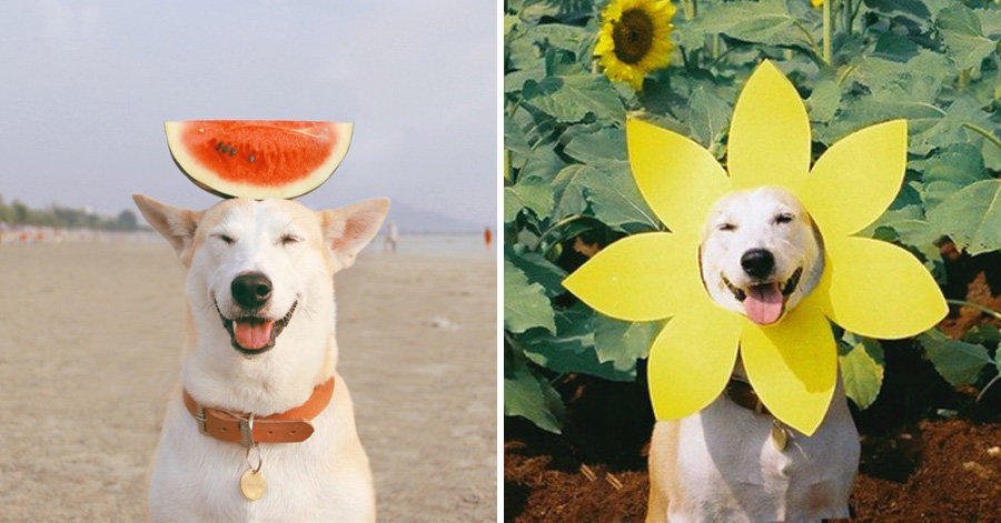 Meet Gluta The Smiling Dog That Beat Cancer - Meet gluta the smiling dog that beat cancer