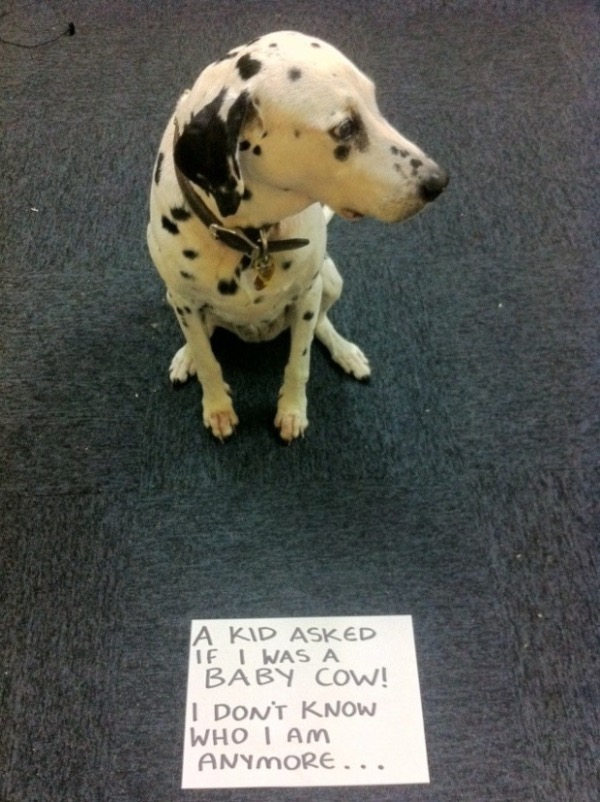 guilty-dogs-5