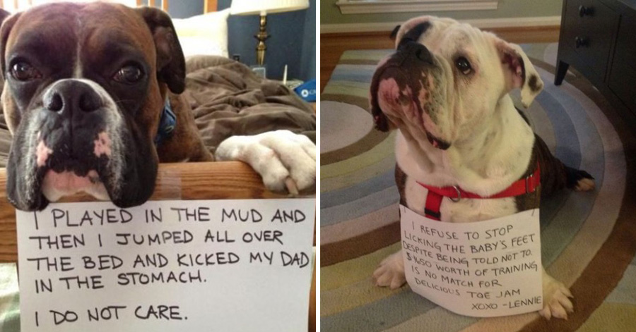 Guilty Dogs That Would Do It Again If They Could Page Of - 26 funny photos of guilty dogs