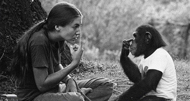 chimp_03
