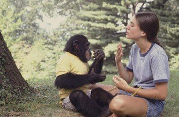 chimp_09
