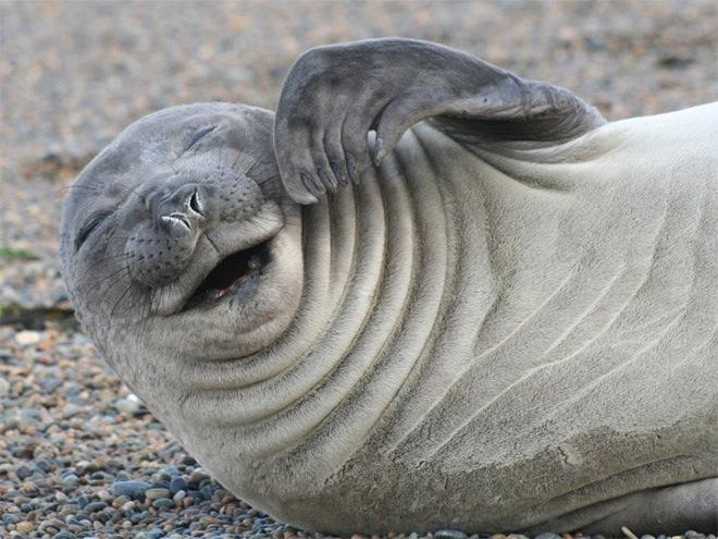 laughing-seals-10