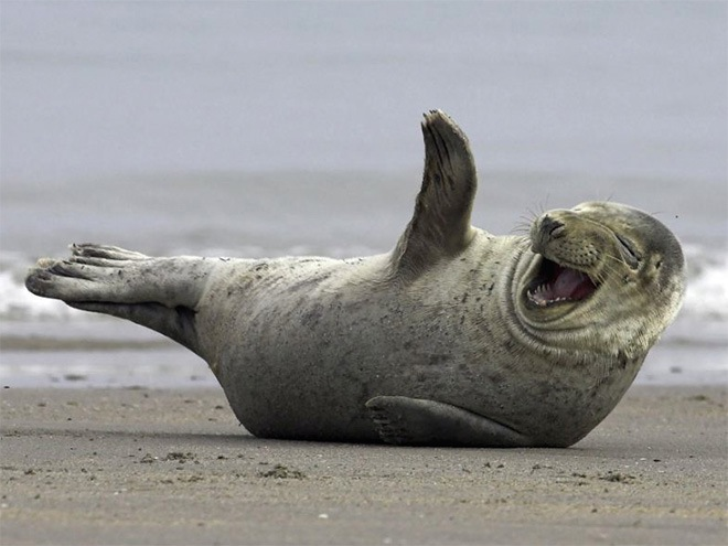 laughing-seals-2