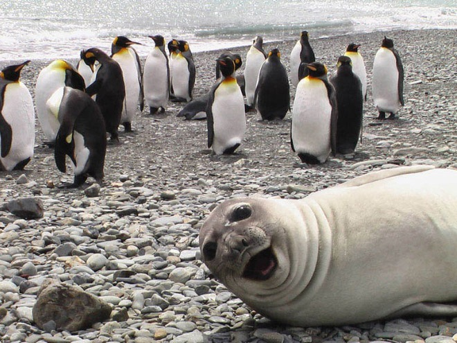 laughing-seals-5