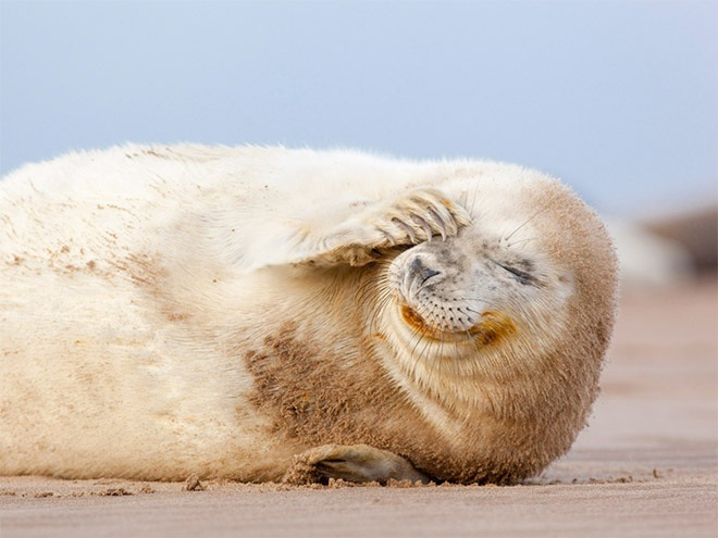 laughing-seals-9
