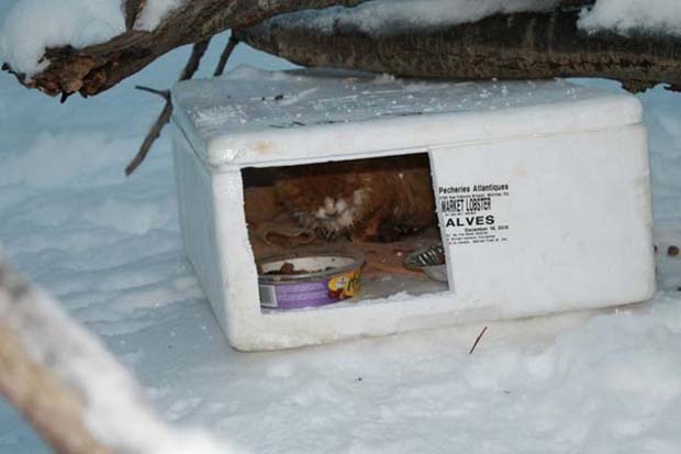box-in-the-snow-3
