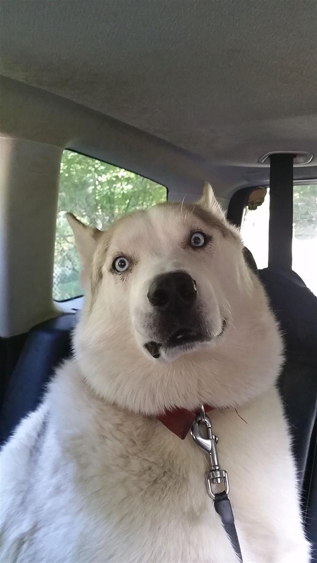 Times Dogs Realized They Were Going To The Vet Instead Of The - 15 times dogs realized they were going to the vet instead of the park their reactions are priceless