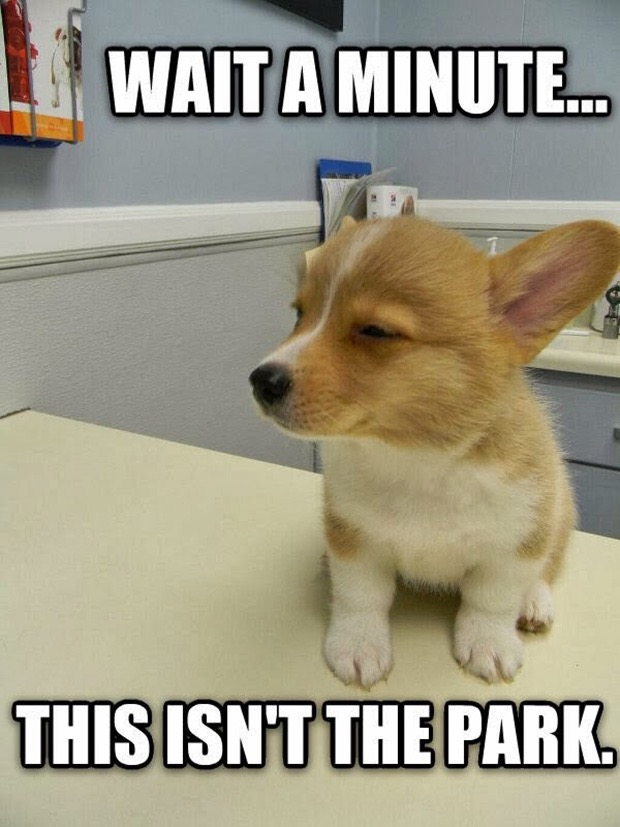 Funny Dog Memes Reddit : Times dogs realized they were going to the vet instead