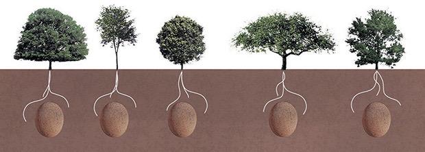 eco-friendly-burial-pods-3