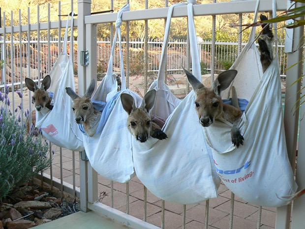 kangaroo-sanctuary-slice-springs-10