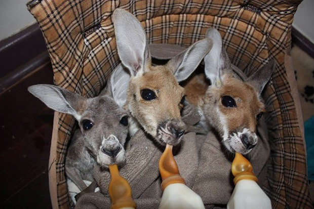 kangaroo-sanctuary-slice-springs-11